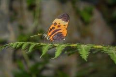 Бабочка при множественные цвета отдыхая на зеленой листве стоковое изображение