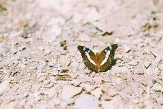 Бабочка против каменной предпосылки Стоковые Изображения RF