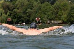 Бабочка пловца или ход заплывания дельфина Стоковое Изображение RF