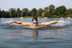 Бабочка пловца или ход заплывания дельфина Стоковая Фотография RF