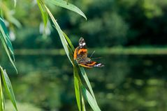 Бабочка распространяя свои крыла Стоковые Изображения