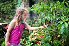 Бабочка ребенка наблюдая на тропическом саде стоковое фото
