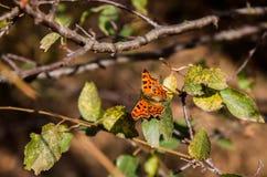 Бабочка садить на насест на хворостине стоковое фото