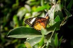 Бабочка садить на насест на дереве Стоковые Фото
