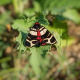 Бабочка сидит на листве завода habitat стоковая фотография rf