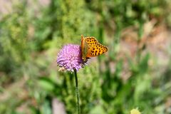Бабочка сидит на цветке в траве Стоковое Фото