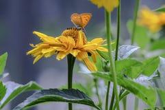 Бабочка сидя на цветке, крупный план Стоковые Изображения RF