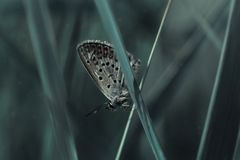 бабочка симпатичная стоковое изображение