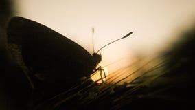 бабочка силуэта на траве Стоковое Фото