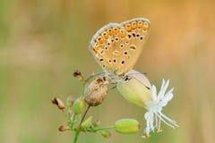 Бабочка спать на цветке на крупном плане сумрака стоковые изображения