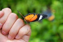 бабочка сподручная Стоковая Фотография RF