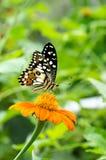 Бабочка стоя на лист дерева Стоковое Фото