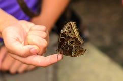 Бабочка стоя на пальце женщины Стоковая Фотография