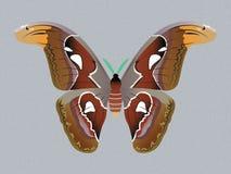 Бабочка сумеречницы атласа Бесплатная Иллюстрация