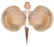 Бабочка сделанная seashells Стоковая Фотография