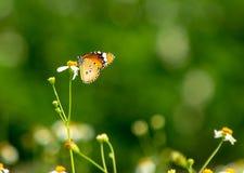 Бабочка с цветками Стоковая Фотография