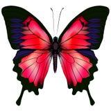 Бабочка также вектор иллюстрации притяжки corel Стоковые Изображения RF