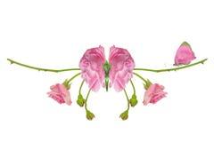 Бабочка фантазии с розовыми крылами Стоковое Фото