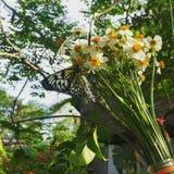 Бабочка Филиппин в ботаническом саде Стоковые Изображения