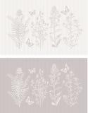 Бабочка флоры весны стального серого цвета Стоковое Изображение
