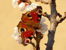 бабочка цветастая Стоковые Фотографии RF
