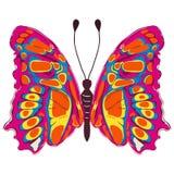 бабочка цветастая Стоковые Изображения