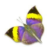 бабочка цветастая Стоковое фото RF