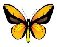 бабочка цветастая Бесплатная Иллюстрация