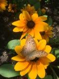 бабочка цветастая Стоковые Фото