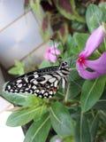 бабочка цветастая стоковое изображение rf