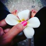 Бабочка цветка Стоковые Изображения RF