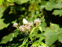 Бабочка, цветок, пчела, выходит Стоковые Фотографии RF