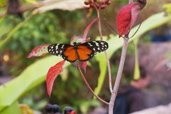 Бабочка & цветок Стоковые Изображения
