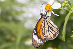 Бабочка & цветок стоковые фото
