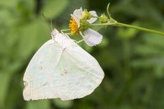 Бабочка & цветок Стоковое Фото