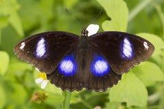 Бабочка & цветок Стоковая Фотография
