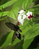 Бабочка чуткого человека Стоковое фото RF