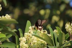 Бабочка, шершень, цветень Стоковое Изображение