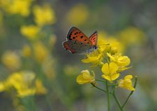 Бабочка любит цветок Стоковое фото RF