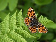 бабочка 01 Стоковые Изображения RF