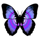 Бабочка 11 стоковое фото rf