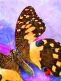 бабочка 2 цветастая Стоковые Изображения RF