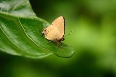 бабочка 23 Стоковое Изображение