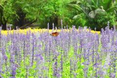 Бабочка Стоковое фото RF