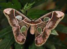 Бабочка. Стоковые Фото