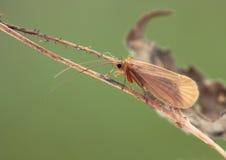 Бабочка. Стоковые Изображения