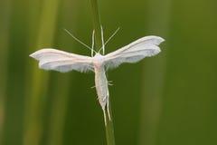 Бабочка. Стоковое Изображение RF