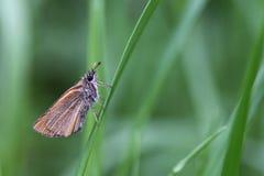 Бабочка. Стоковое Фото