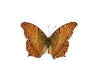 бабочка 4 Стоковая Фотография RF