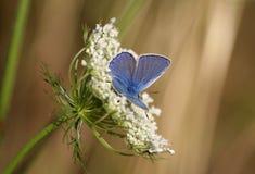 бабочка 4 Стоковое фото RF
